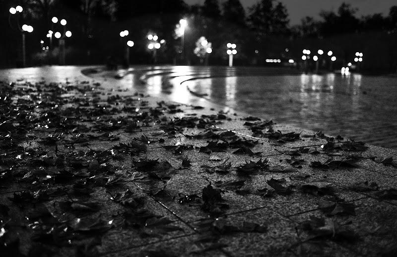 foglie di wallyci