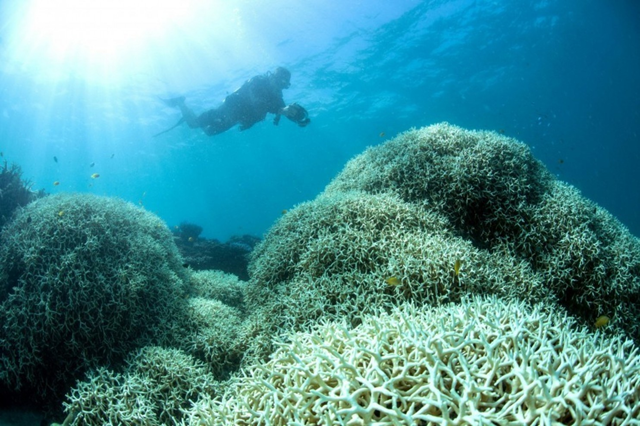 An undated handout photo obtained from the XL Catlin Seaview Survey on 21 March 2016 shows a diver filming a reef affected by bleaching off Lizard Island in the Great Barrier Reef. Photo: XL Catlin Seaview Survey / AFP Photo