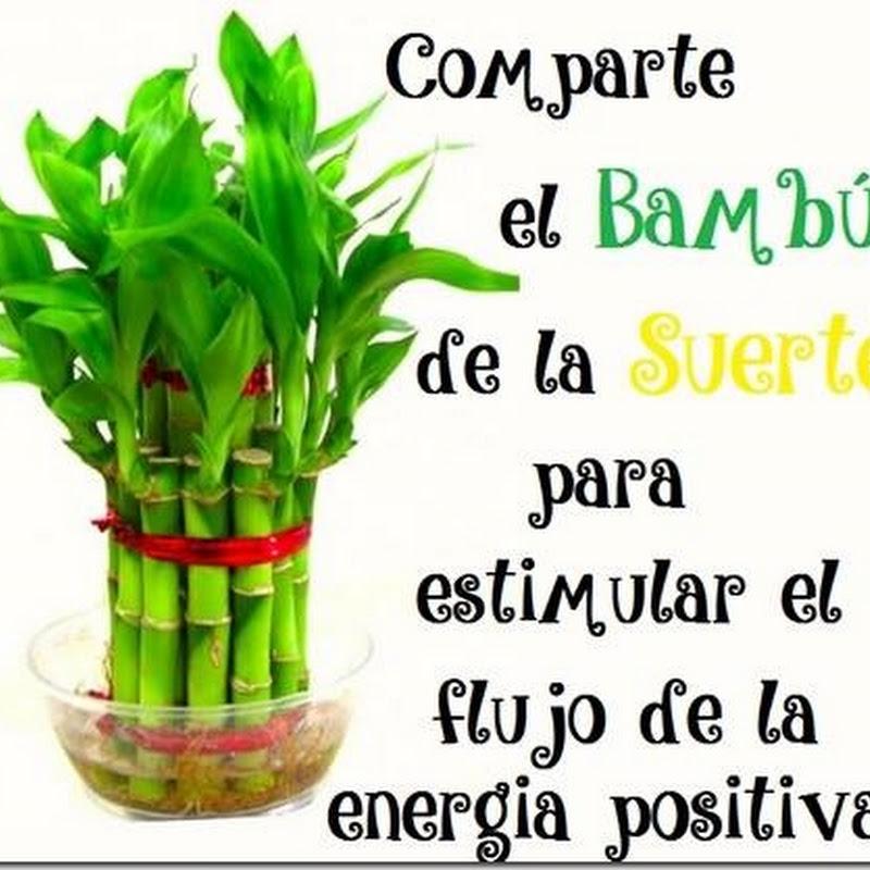 El bambú de la suerte para compartir