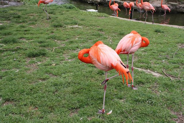 Zoo Snooze 2015 - IMG_7338.JPG