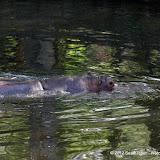 04-07-12 Homosassa Springs State Park - IMGP4542.JPG