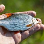 20140825_Fishing_Lysyn_037.jpg