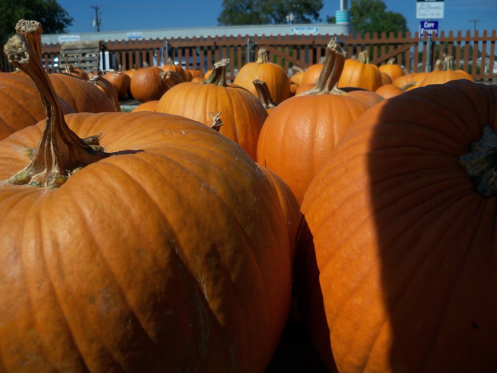 Pumpkin Patch 2015 - 100_0405.JPG