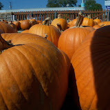 Pumpkin Patch 2015 - 100_0405.JPG