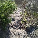 Sandy track near La Perouse (17841)