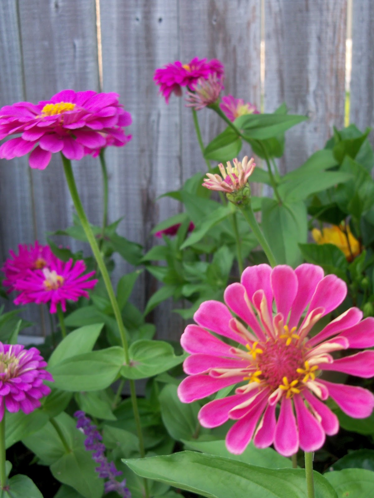 Gardening 2012 - 115_2398.JPG