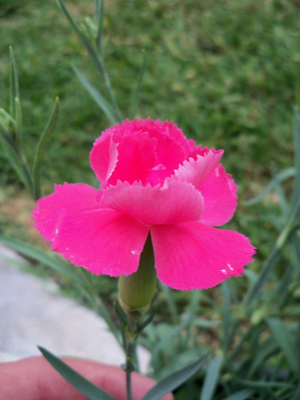 Gardening 2012 - 115_2082.JPG