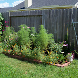 Gardening 2010, Part Three - 101_4283.JPG