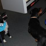 KNON-honden in Emmen - DSC_0807.JPG