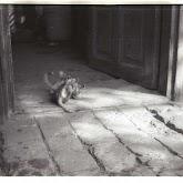 n010-016-1966-tabor-sikfokut.jpg