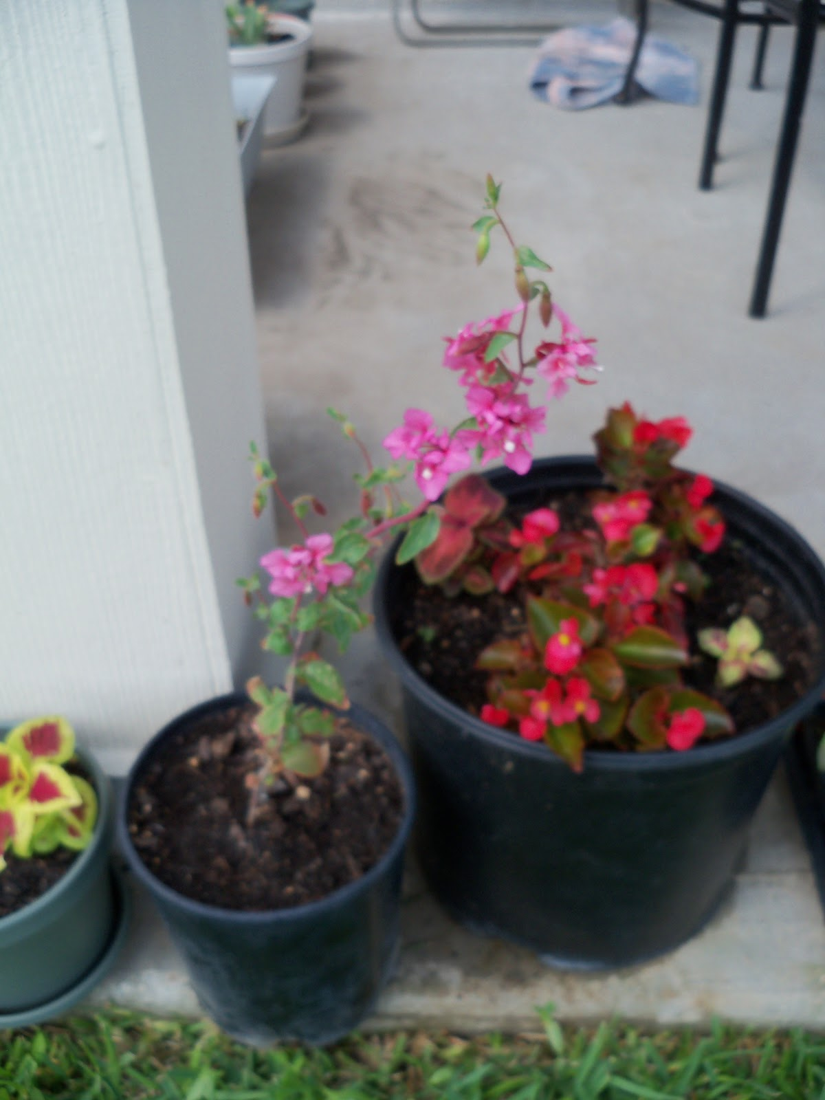 Gardening 2010, Part Two - 101_2773.JPG