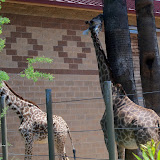 Houston Zoo - 116_8544.JPG