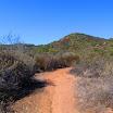 laguna_coast_wilderness_IMG_2263.jpg