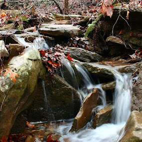 A Trickling Stream by Becky Patlan-Garcia - Nature Up Close Water ( creek, waterfall, cascades, forest )