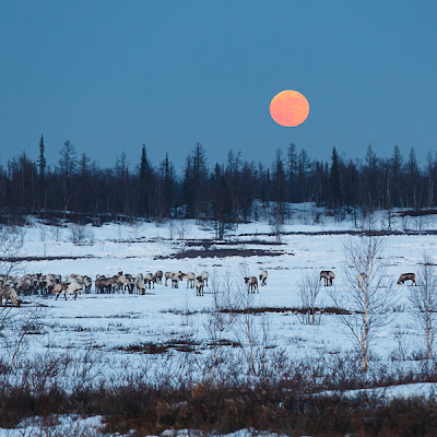 Arctic Moonrise