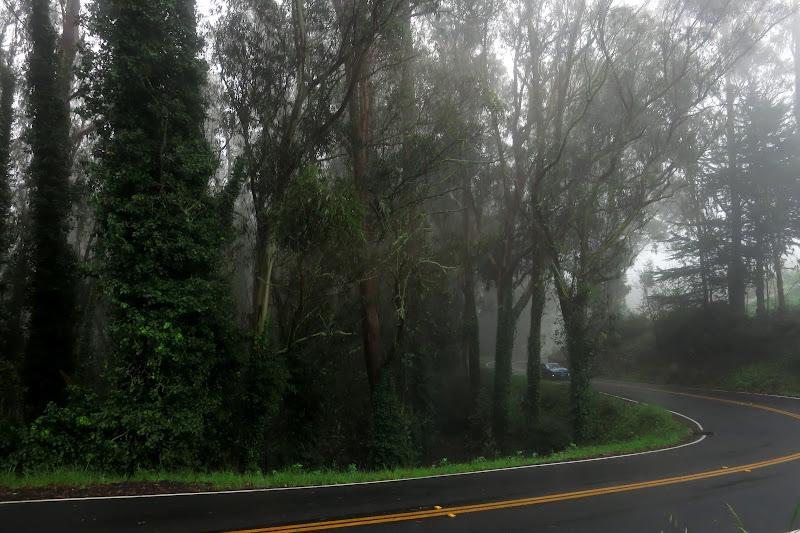 Road to Muir Woods