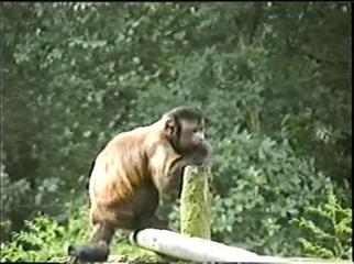 1998.09.09-017 capucin