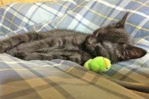 人間と一緒に寝る猫