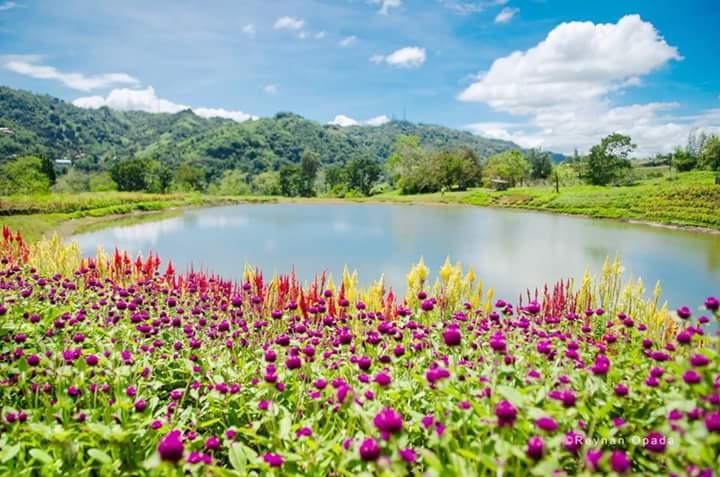Tieza Botanical Garden Malubog Lake Cebu City New Tourists Spot To Visit Guide Amigong