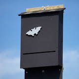 Kestrel-Bat Houses - pic1.jpg
