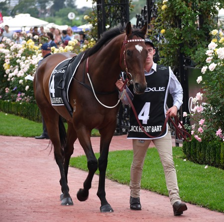 newmarket_black heart bart 1