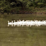 chattbir zoo cranes1.jpg