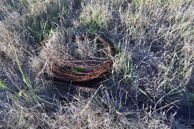 a coil of wire and a fallen wooden fence post