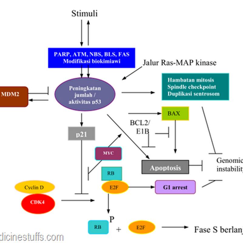 Kanker perubahan biokimiawi dan regulator pertumbuhan sel kanker kanker perubahan biokimiawi dan regulator pertumbuhan sel kanker medicine stuffs ccuart Choice Image