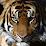 Alessio Tiger Guerra's profile photo