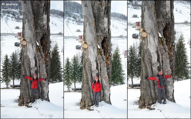 copac-batran-rw.jpg
