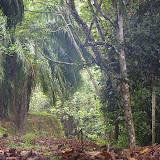 Entre la plantation de palmiers à huile et la forêt (lot n°2). Sukau, 12 août 2011. Photo : J.-M. Gayman