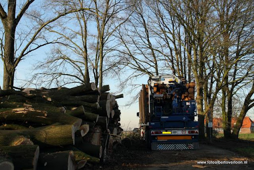 Houtoogst in de bossen van overloon 17-01-2012 (22).JPG