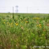05-20-13 Arbuckle Field Trip HFS2013 - IMGP5127.JPG