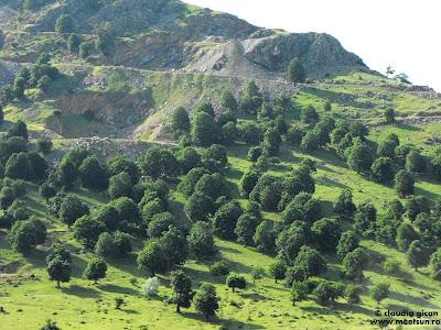 Macin. Cariere de granit și copaci pitici
