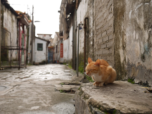cat resting with its eyes closed in a Zhongshan alley