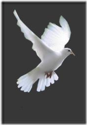 palomas (1)