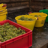 Petites vendanges 2017 du chardonnay gelé. guimbelot.com - 2017-09-30%2Bvendanges%2BGuimbelot%2Bchardonay-205.jpg
