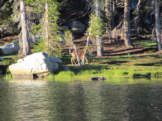 deer grazing on the far side of the lake