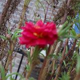 Gardening 2009 - 101_5061.JPG