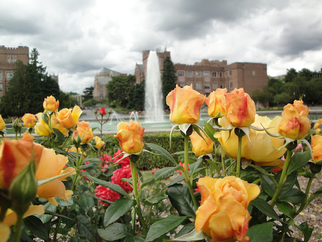 Bright yellow Roses will cheer you up even when it's a cloudy day!