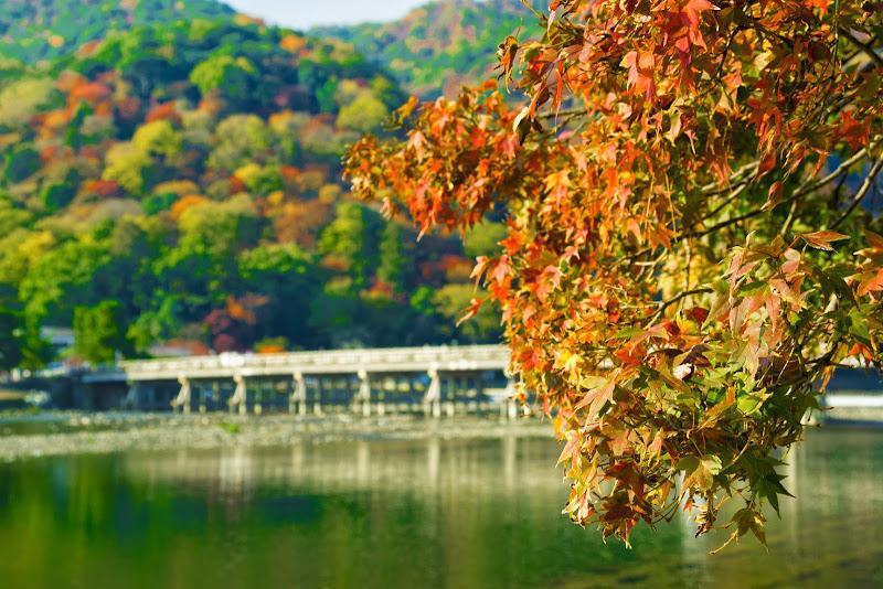 京都 渡月橋 紅葉 写真2