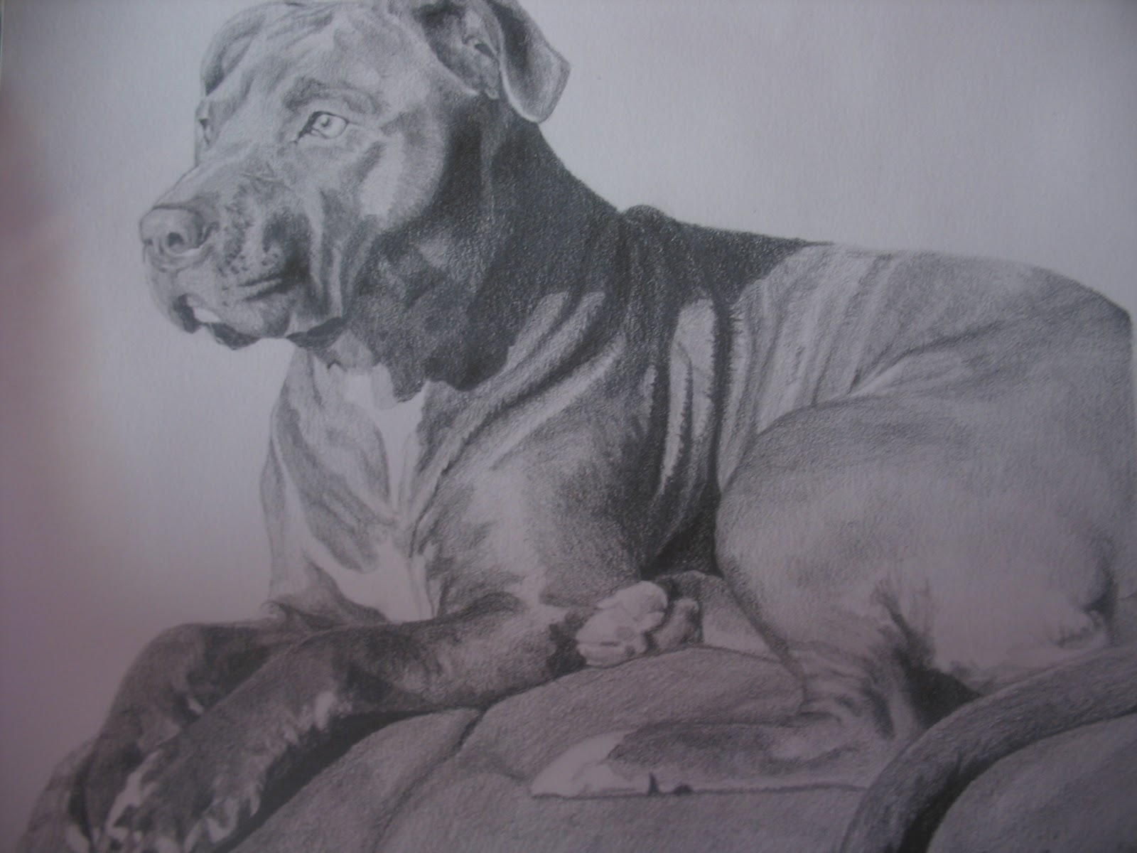 Pitbull dog drawings in pencil - photo#14