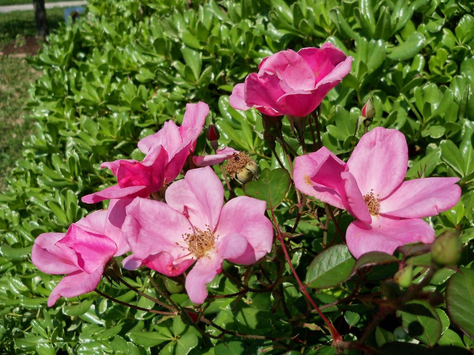 Gardening 2014 - 116_1563.JPG