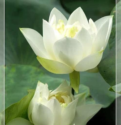 Lien Luu Photo 20