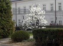 krakowskie przedmieście warszawa 4wiecień 2010 033.jpg