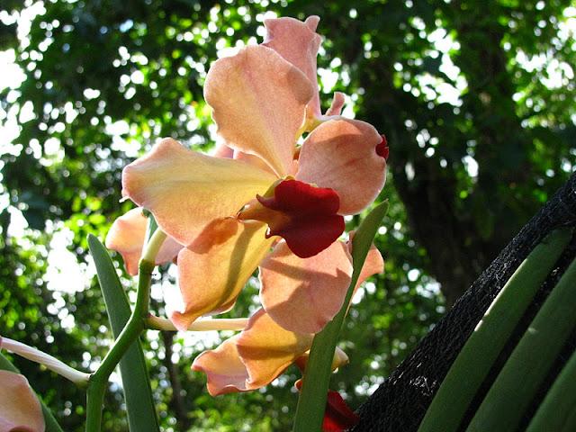 Из зимы в лето. Филиппины 2011 - Страница 7 IMG_0002%252520%2525288%252529