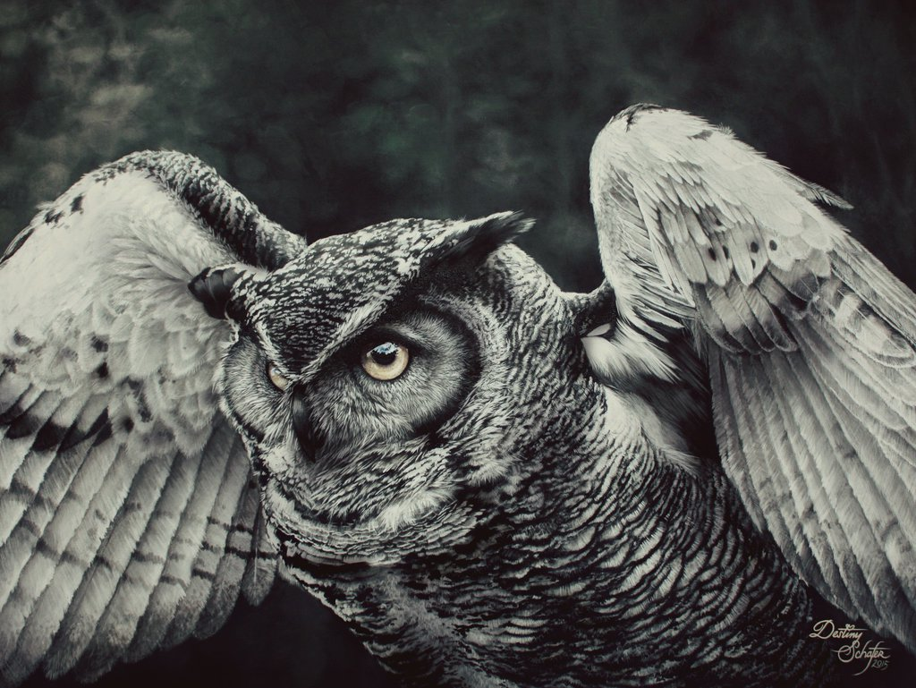 Owl painting by gimgams1