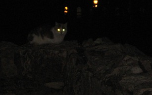 Cat_at_night_in_the_castle_district_in_Budapest