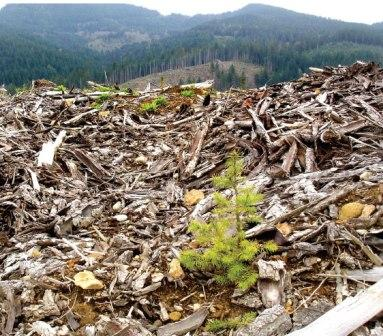 An European Program Seeks To Promote Forest Biomass