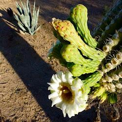 AZ: Plants, birds, & Everything in Between